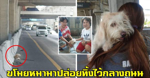 หมาถูกขโมยมาปล่อยไว้กลางถนน จนสาวใจดีช่วยเหลือและชาวโชเชียลช่วยกันจนเจอเจ้าของตัวจริง