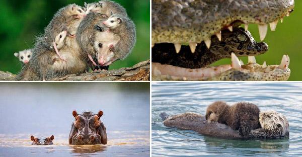 25 สัตว์โลกสุดยอดคุณแม่ที่ยอมเสียสละตัวเอง ให้ลูกน้อยเติบโตได้อย่างแข็งแกร่ง