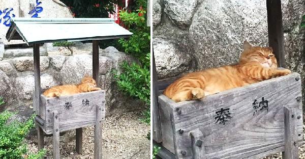 มัดรวมแมววัดในญี่ปุ่น ที่น่ารักจนอยากเก็บกลับบ้านไปเลี้ยง