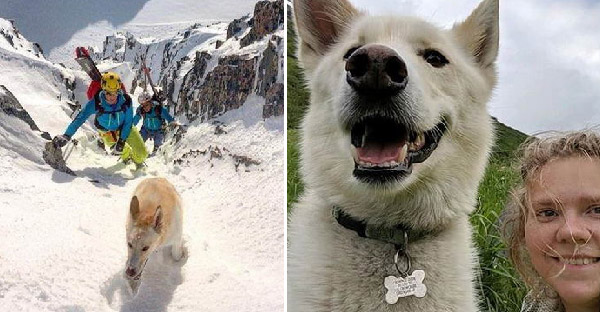 ฮัสกี้ปริศนาโผล่ช่วยสาวลื่นตกภูเขาหิมะ และนำทางเธอกลับบ้านได้ด้วย