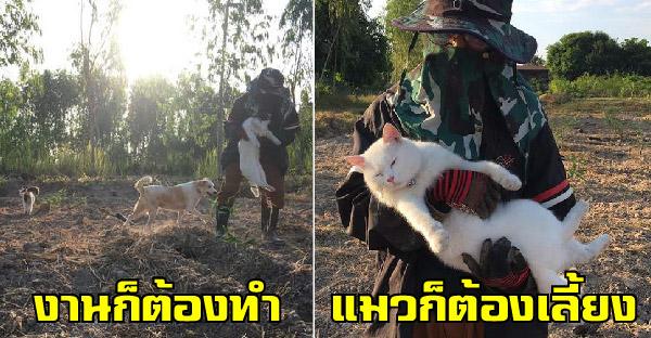 ดูโอ้แมวกรุงต้องกลายเป็นแมวบ้านสวน งานการทาสแทบไม่ได้ทำเพราะต้องวิ่งไล่จับกันทั้งวัน