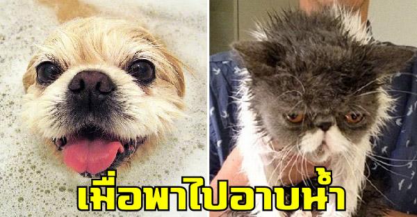 ทั้งๆที่เป็นสัตว์เลี้ยงเหมือนกัน แต่หมากับแมวกลับแตกต่างกันอย่างสุดขั้ว