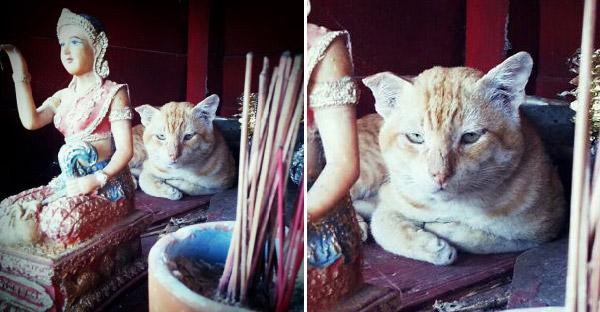 15 ภาพยืนยันว่าแมวเป็นสัตว์ที่คิดจะครองโลก เพราะพวกมันไม่เคยเกรงกลัวสิ่งศักดิ์สิทธิ์กันบ้างเลย