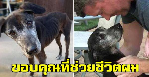 สุนัขป่วยรอวันสุดท้ายของชีวิต แต่ผู้ช่วยชีวิตไม่ยอมแพ้ ทำทุกวิถีทางจนชุบชีวิตเหมือนเกิดใหม่ได้อีกครั้ง