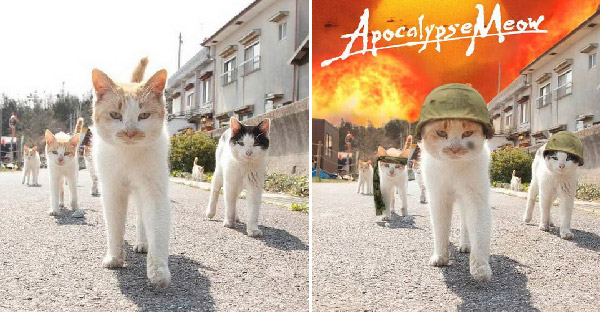 ภาพแมวจรสุดแนวโดนตัดต่อกันอย่างเฮฮา จนกลายเป็นกระแสบนโลกออนไลน์