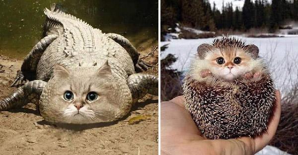 เมื่อสัตว์โลกมีใบหน้าเป็นแมวเหมียว จะเฮฮาขนาดไหนกันบ้าง