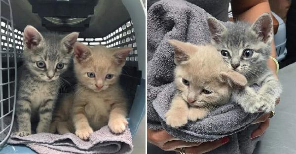 ลูกแมวสองตัวถูกพบอยู่ข้างถนน และพวกมันกอดกันไม่ห่าง จนกระทั่งความช่วยเหลือมาถึง