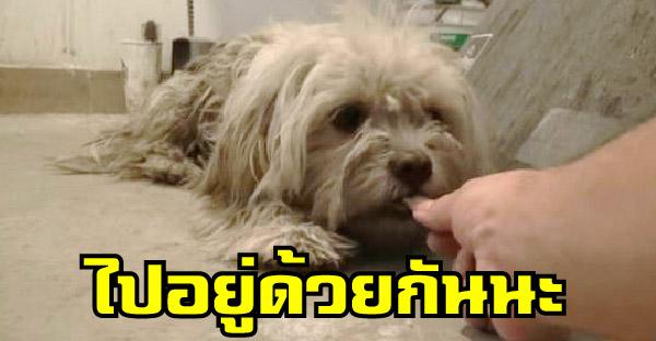 กู้ภัยสัตว์ใช้ความจริงใจพิชิตใจหมาจรจัดขี้กลัว จนสามารถพาน้องเริ่มต้นชีวิตใหม่ได้อีกครั้ง