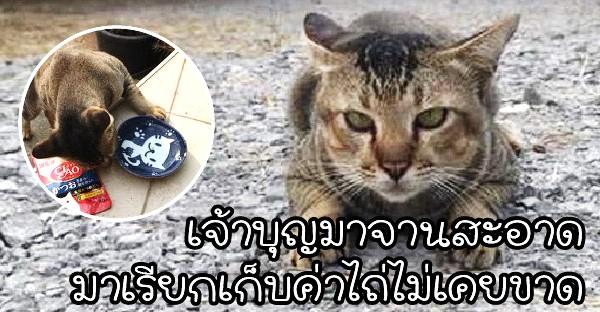 """""""บุญมาจานสะอาด"""" แมวจรจัดลายสลิด ที่มาดักเรียกเก็บส่วยไม่เคยขาด"""