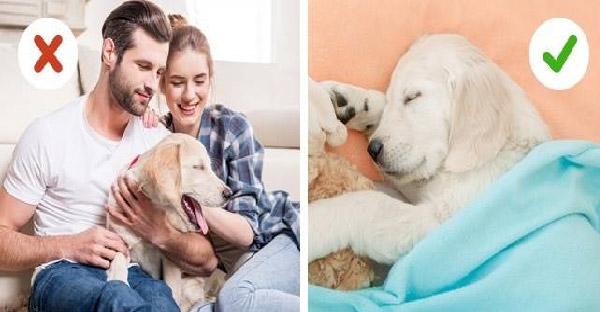 14 พฤติกรรมที่ควรหลีกเลี่ยงของคนเลี้ยงสัตว์ ที่อาจเคยผิดพลาดกันมากแล้ว