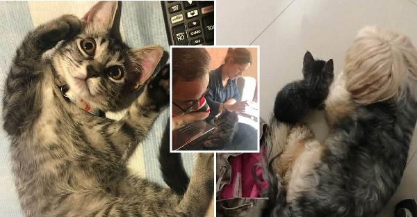 คู่รักตั้งใจอุปถัมภ์ลูกแมวแค่ชั่วคราว แต่สุดท้ายแพ้ใจมิ้วน้อย จึงโดนยึดครองทั้งบ้านและหัวใจเรียบร้อย