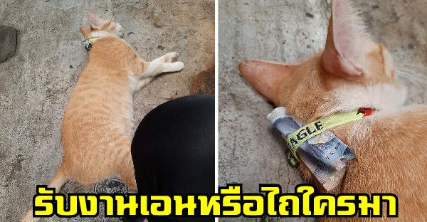 'อิเหลือง' แมวตลาดขี้อ้อน ถึงขั้นมีเงินเหน็บปลอกคอ ชาวเน็ตสงสัยรับงานเอนหรือเก็บค่าคุ้มครองใครมา