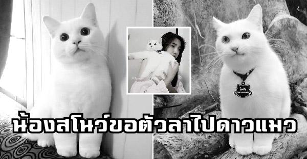 คนรักแมวร่ำไห้ หลังน้องสโนว์ขอตัวลาไปวิ่งเล่นบนดาวแมว