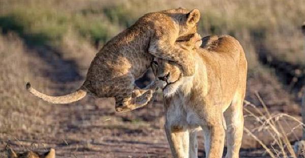 ความผูกพันระหว่างแม่กับลูกของสัตว์โลก ที่ทำให้อบอุ่นหัวใจอย่างบอกไม่ถูก