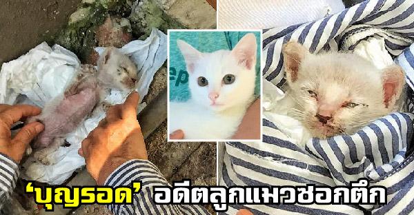 'บุญรอด' อดีตลูกแมวซอกตึกไร้คนเหลียวแล แต่คนใจดีช่วยชุบชีวิตให้ใน 2 เดือน