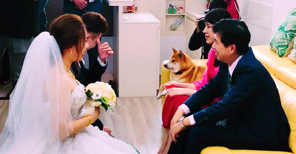 น้องหมาร่วมเป็นพยานรักให้กับเจ้าของในงานแต่ง ช่วยสแกนเจ้าบ่าวให้จนเขินสุดๆ