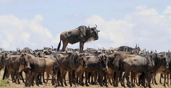 14 ภาพสัตว์โลกเฮฮาที่ยอดเยี่ยมระดับมือโปร