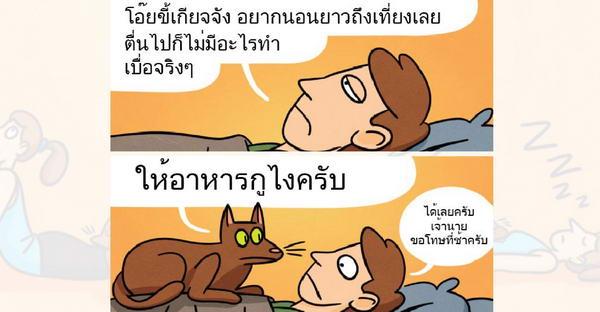 9 ข้อดีของการเลี้ยงแมว..ที่หลายคนอาจคิดไม่ถึง