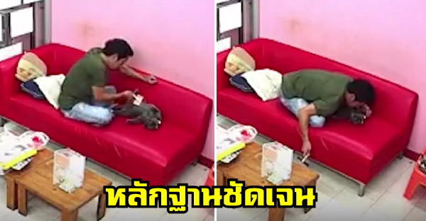 สาวเปิดกล้องวงจรปิดดู พบว่าสามีแอบนัวเนียแมว ตอนที่เธอไม่อยู่บ้าน