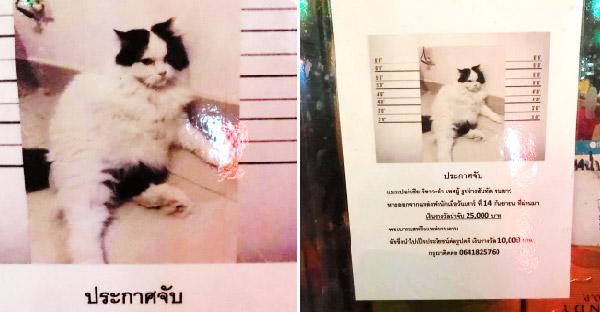 สาวสะดุดตาป้ายแมวหาย ที่เจ้าของประกาศตามหาได้อย่างพีค