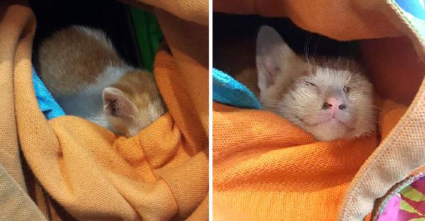 สาวช่วยชีวิตลูกแมวร้องมิ้วๆในห้องเครื่องรถยนต์ หลังติดมาไกลจากต่างจังหวัด