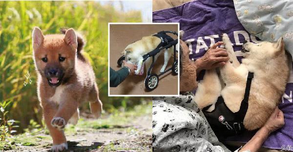 ชาวญี่ปุ่นเลี้ยงหมานานกว่า 20 ปี ถึงแม้จะป่วยแต่ขอดูแลจนกว่าจะต้องจากกัน