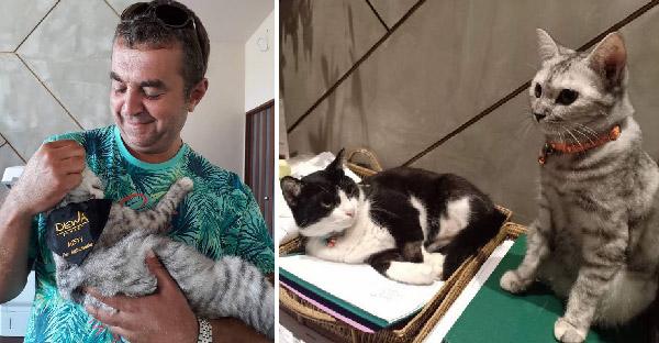 โรงแรมภูเก็ตจ้างแมวเป็นพนักงานต้อนรับ แถมมีส่วนลดพิเศษสำหรับทาสแมวด้วย