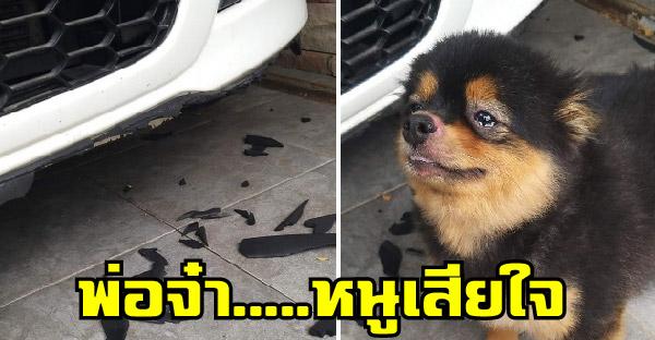 น้องหมาบีบน้ำตาหลังกัดรถคุณพ่อ หมดไปเท่าไหร่แล้ว กับคำว่าน้องยังเด็ก