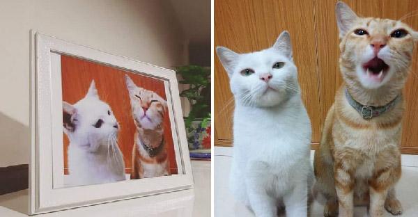 สาวขยายภาพแมวเพื่อนบ้านใส่กรอบ หลังมาเล่นที่บ้านประจำ เป็นที่ระลึกแห่งการจากลาไปดาวแมว