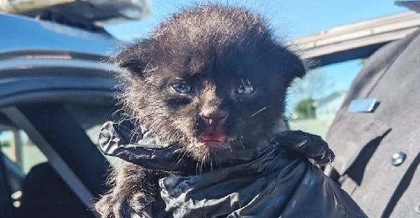 ชายหนุ่มได้ยินเสียงลูกแมวร้องไห้จากข้างถนนที่พลุกพล่าน จึงรีบเข้าช่วยเหลือได้ทันเวลา