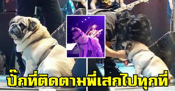 พี่เสกเอาน้องหมาปั๊กขึ้นคอนเสิร์ตด้วย เป็นอีกหนึ่งโมเม้นท์ที่หลายคนไม่เคยได้เห็น