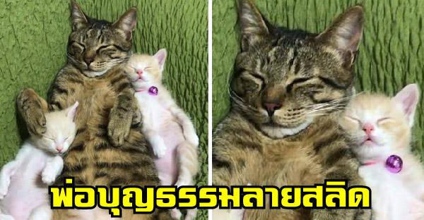 พ่อบุญธรรมลายสลิดโผเข้าช่วยเลี้ยงสองลูกแมวกำพร้า เอ็นดูหนักยิ่งกว่าพ่อแท้ๆ