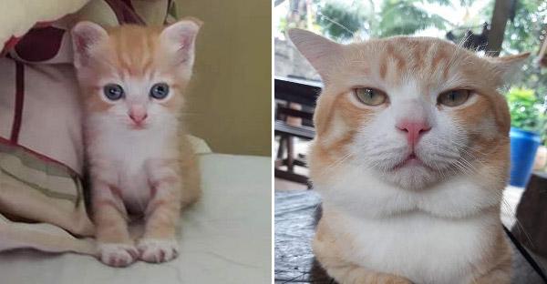 สาวโพสต์เปรียบเทียบลูกแมวตอนเด็กกับตอนโต แค่ปีเดียวเปลี่ยนไปได้ขนาดนี้เลย