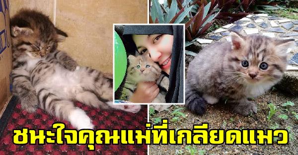 คุณแม่เกลียดแมวและไม่มีตัวไหนชนะใจได้ ยกเว้นมิ้วน้อยตัวใหม่ ที่ถึงกับร้องไห้เพราะนางมาแล้ว