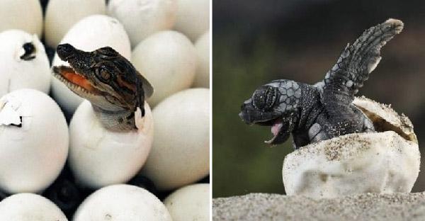 ไข่แปลกๆของสัตว์โลก ที่เดาไม่ออกถ้าไม่เห็นข้างใน