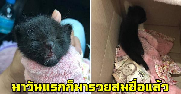 สาวช่วยชีวิตลูกแมวหลงในบ้านหลังเก่า พามาวันแรกก็เฮง จึงได้ชื่อว่า 'มารวย'