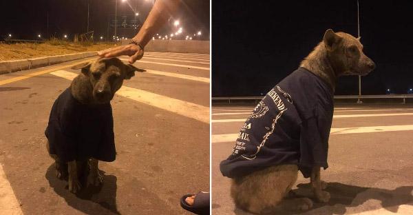 สาวเจอหมาข้างถนนแต่เอากลับหอไม่ได้ ทำได้แค่ใส่เสื้อกันหนาวให้ ก่อนขอความช่วยเหลือจนได้บ้านอุปถัมภ์