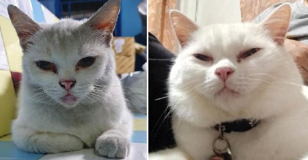 15 ภาพอดีตแมวจรจัด ที่ปัจจุบันมูฟออนเป็นเจ้าของบ้านแล้ว