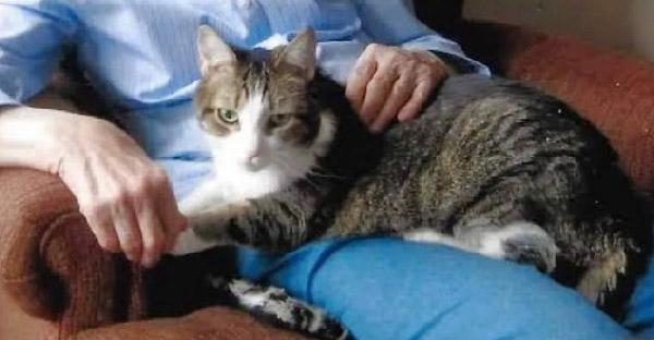 เมื่อแมวที่รักจากไปดาวแมว หลังจากนั้น 4 ชั่วโมง คุณยายก็ตามไปอยู่ด้วยอย่างสงบ