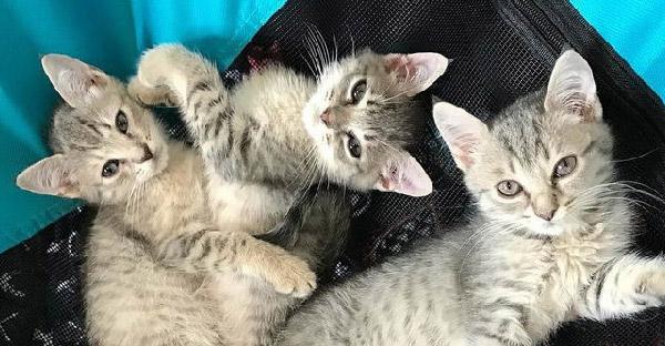 เจ้าของไม่พร้อมดูแลลูกแมว จึงปักป้ายแจกฟรีก่อนสาวใจดีผ่านมาช่วยเหลือ