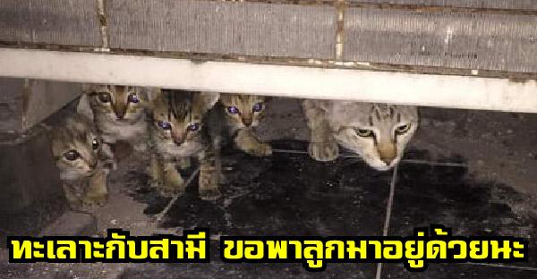 แม่แมวทะเลาะกับพ่อ หอบลูกหนีออกจากบ้าน สุดท้ายสามีตามมาง้อกลับบ้านเรียบร้อย