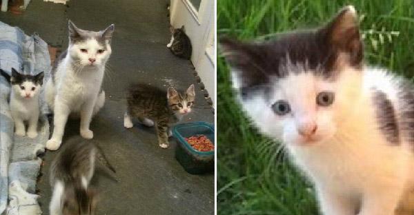 สองพี่น้องใจดีให้อาหารแมวจรทุกวัน จากนั้นมันจึงพาลูกๆมาพบหน้าครอบครัวใหม่ซะเลย