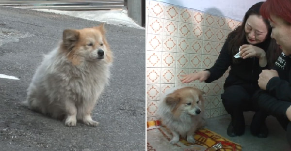 น้องหมารอเจ้าของที่เดิมตลอดสามปี หลังเขาป่วยเป็นอัลไซเมอร์ และไม่ได้กลับบ้านอีกเลย