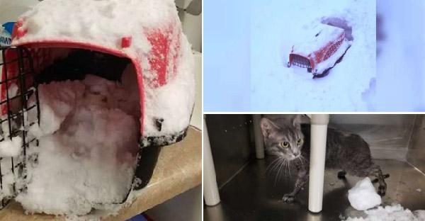 ลูกแมวตัวน้อยในกรงจมกองหิมะ โชคดีมีคนผ่านมาเจอ ก่อนที่จะสายเกินไป