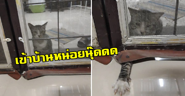แมวปริศนาโผล่มาหน้าบ้าน ยื่นมือขอความเห็นใจ แต่ทาสรู้ทันแผนการ ไม่ยอมใจอ่อนง่ายๆ