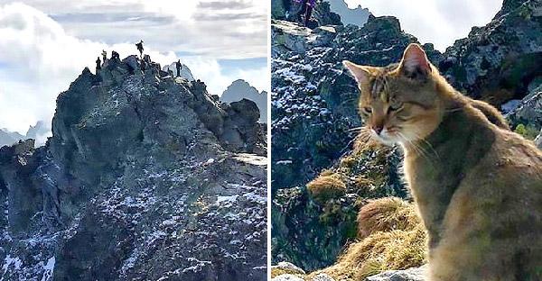 หนุ่มพิชิตภูเขาสูงกว่า 2,500 เมตร แต่กลับพบเหมียวปริศนานั่งรออยู่ก่อนแล้ว