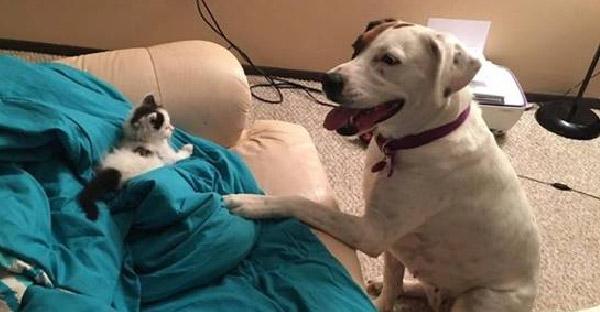 ทาสหมาแอบกังวลใจ หลังเพื่อนฝากให้เลี้ยงลูกแมว