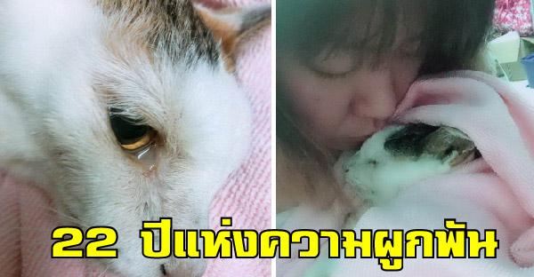สาวน้ำตาซึมบอกลาแมว ขอบคุณช่วงเวลา 22 ปีที่อยู่ด้วยกัน