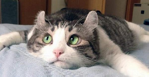 งานวิจัยยืนยันแมวรู้ว่าถูกเรียกชื่อตัวเอง แต่พวกมันเลือกที่จะไม่สนใจมากกว่า