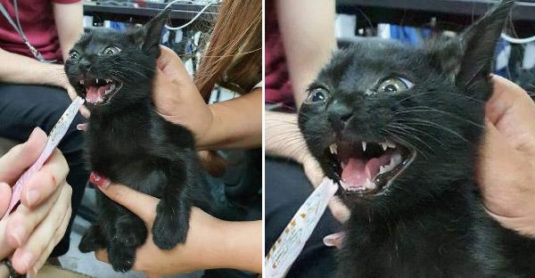 น้องแมวติดรถธนาคาร พนักงานช่วยกันวุ่นวายเจองับไป 3 คน กว่าจะได้บ้านไปเป็นหนุ่มเมืองจันท์